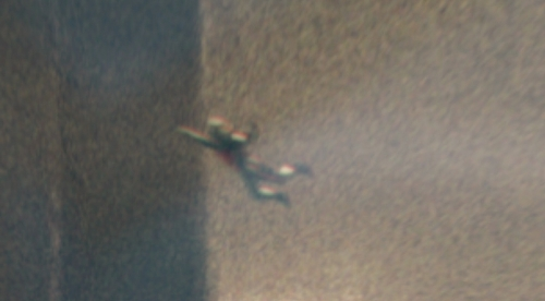 ant-man007
