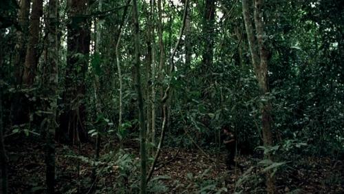 TropicalMalady36