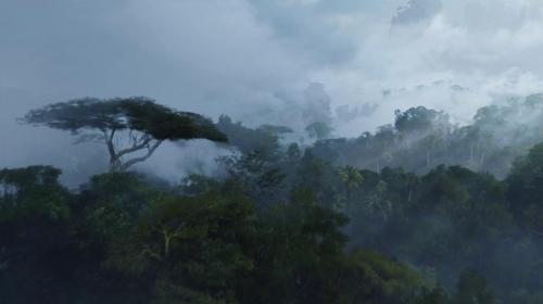 Avatar 001