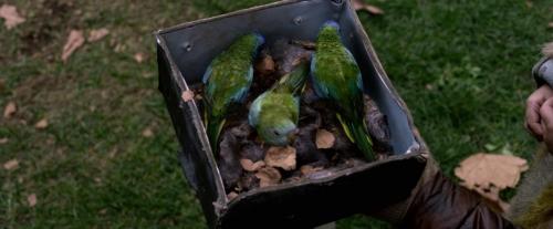 Birdbox 059