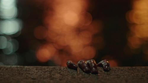 Bumblebee 054