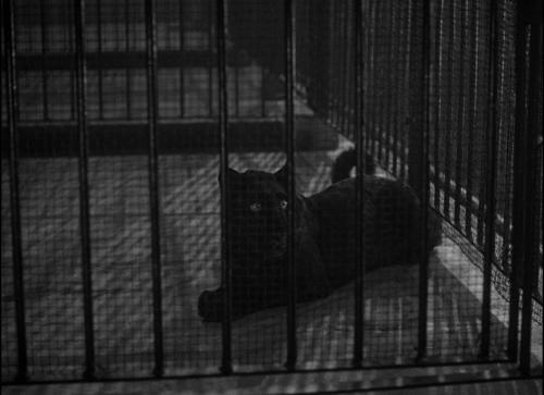 Cat People 063