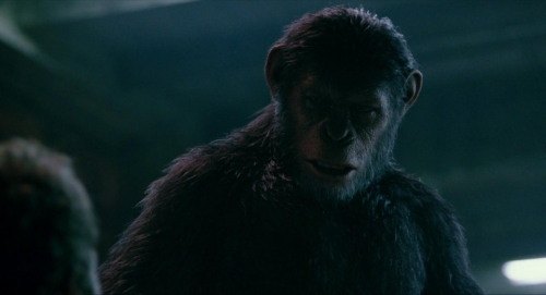 Dawn of the Planet of the Apes 033