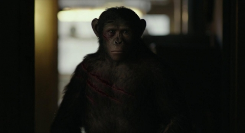 Dawn of the Planet of the Apes 048