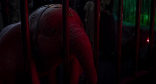 Dumbo 031