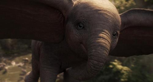 Dumbo 062