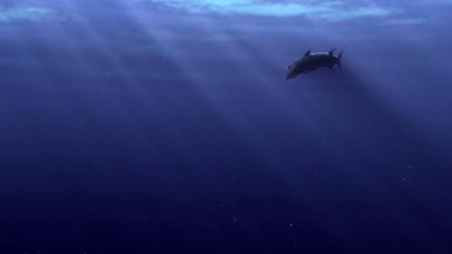Finding Nemo 005