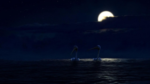 Finding Nemo 021
