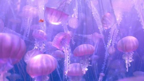 Finding Nemo 028