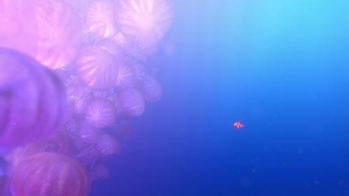 Finding Nemo 029
