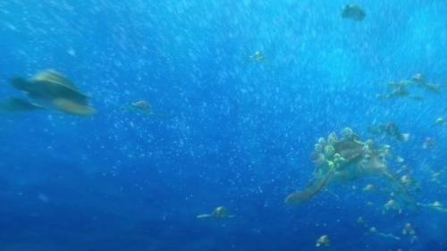 Finding Nemo 038