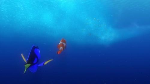 Finding Nemo 039