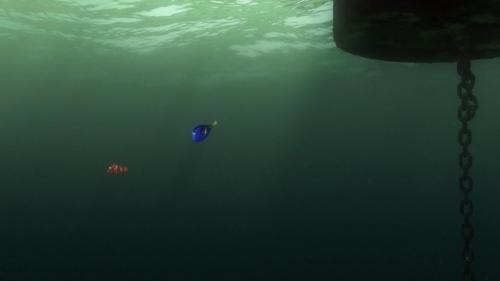 Finding Nemo 055