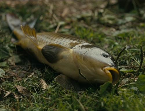 Fishtank029
