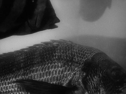 Godzilla 030