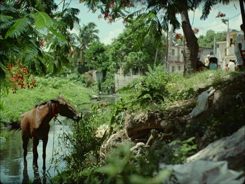 Guava Island 008