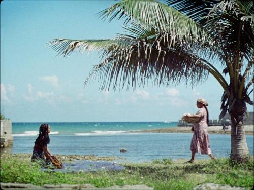Guava Island 022