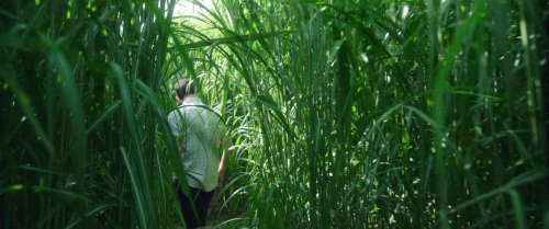 In The Tall Grass 007