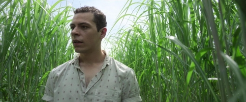 In The Tall Grass 009