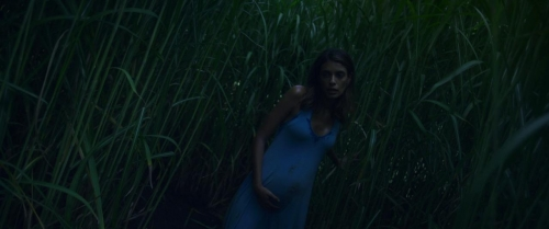 In The Tall Grass 013