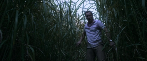 In The Tall Grass 036