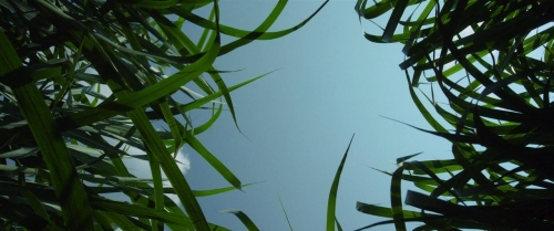 In The Tall Grass 065