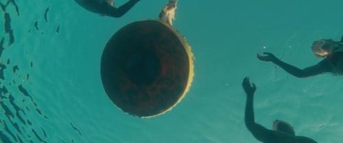 Piranha 032