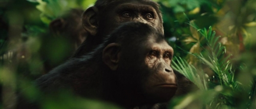 Rise of the Planet of the Apes 002
