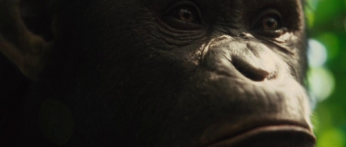 Rise of the Planet of the Apes 003