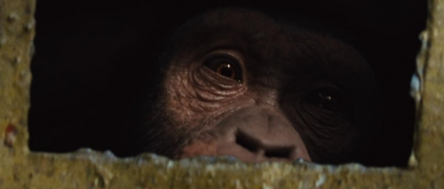 Rise of the Planet of the Apes 004