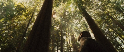 Rise of the Planet of the Apes 015
