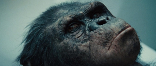 Rise of the Planet of the Apes 022