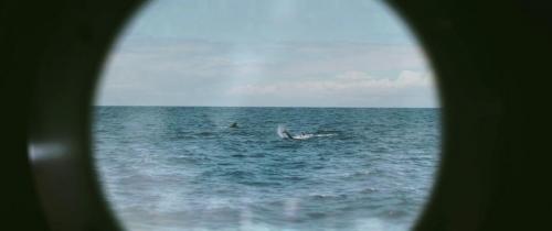 Sea Fever 014