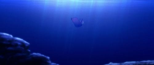 Starfish 039