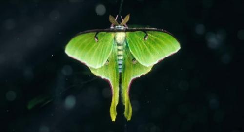 The Moth Diaries 001