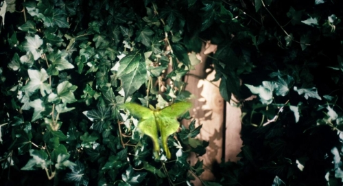 The Moth Diaries 021