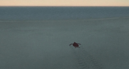 The Red Turtle 065