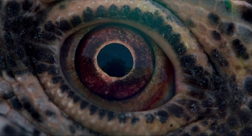Voyage of Time 032