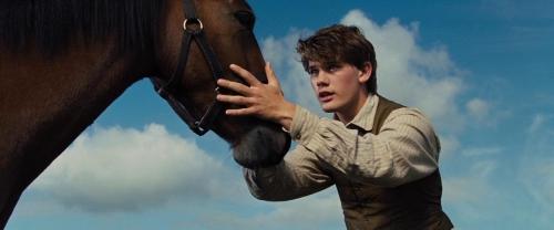 War Horse 008