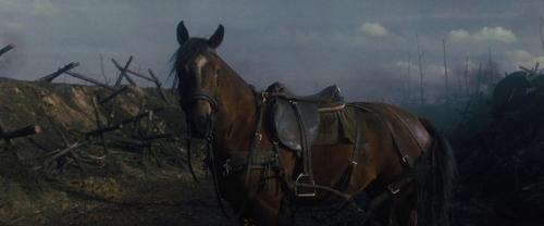 War Horse 033