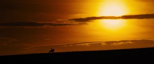 War Horse 047