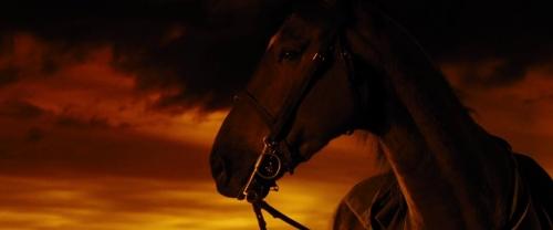 War Horse 050