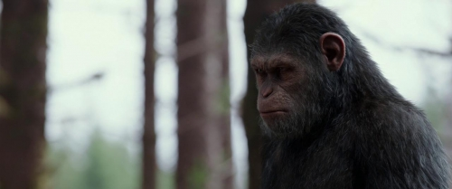 War for the Planet of the Apes 014