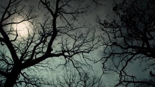 Winter's Bone 002