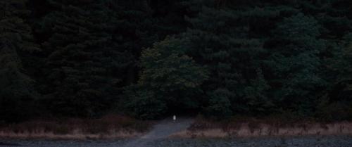 Woodshock 013