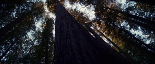 Woodshock 014