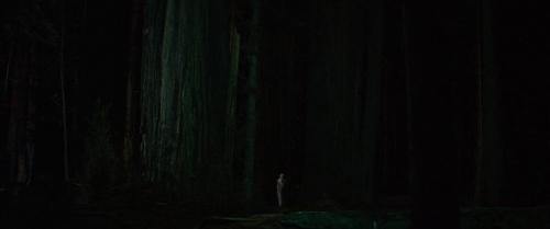 Woodshock 036