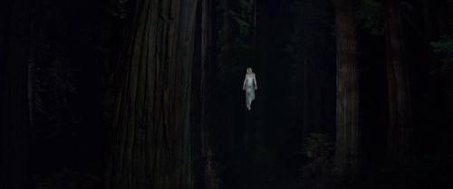 Woodshock 059