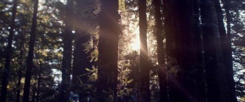Woodshock 060